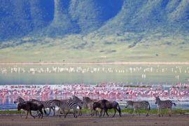 6 days tanzania safari holiday