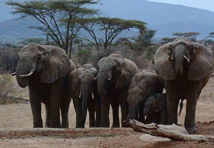 7 Day Luxury safari Kenya