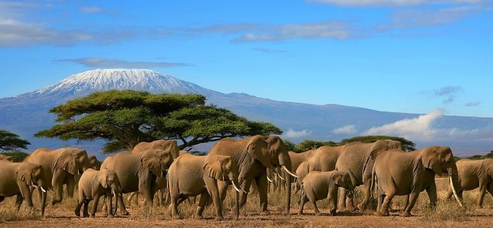 8 days kenya tanzania lodge safari
