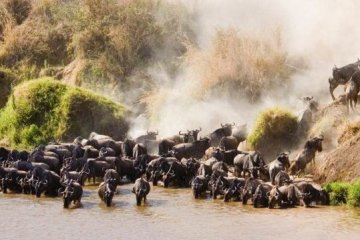 4 day masai mara safari