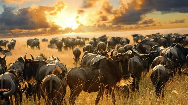 kenya budget camping safari 5 days
