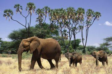 3 days samburu flying safari
