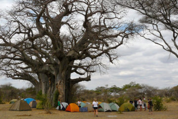 6 days tanzania joining safari groups