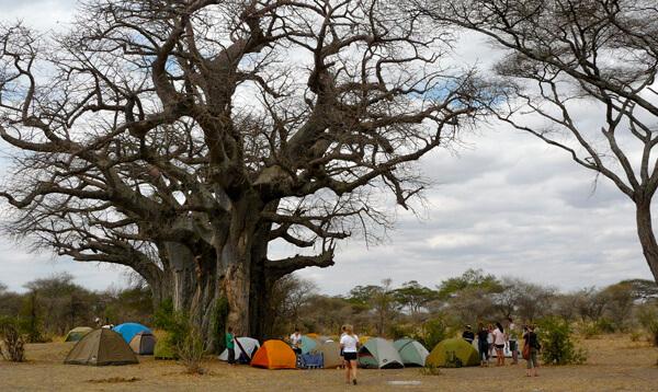 6 days tanzania joining safari groups