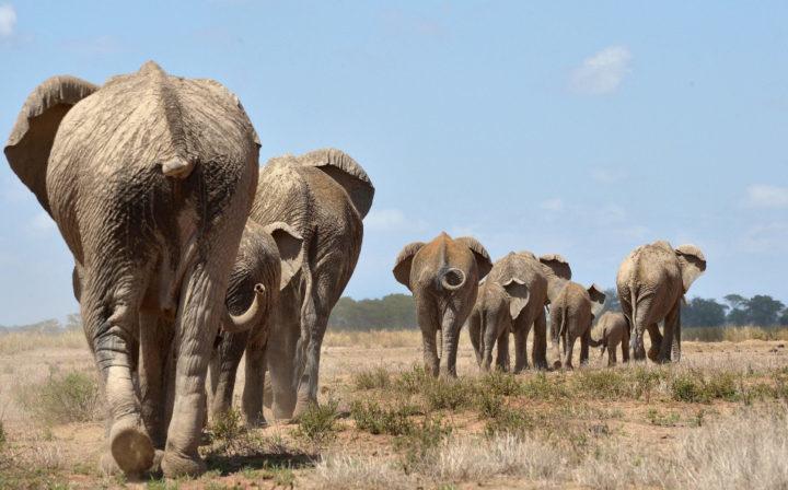 3 days amboseli safari