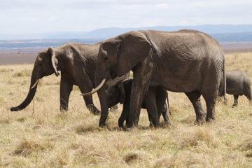 3 days masai mara joining safari
