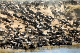 4 day masai mara great migration