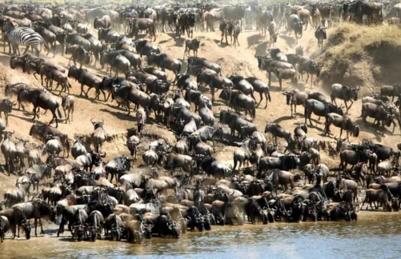 4 day masai mara great migration