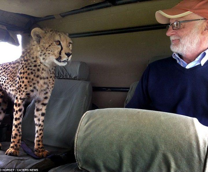 4 days lodge safari kenya