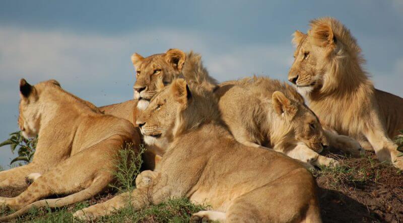 11 days kenya tanzania combined lodge safari
