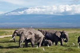 10 days kenya luxury air safari