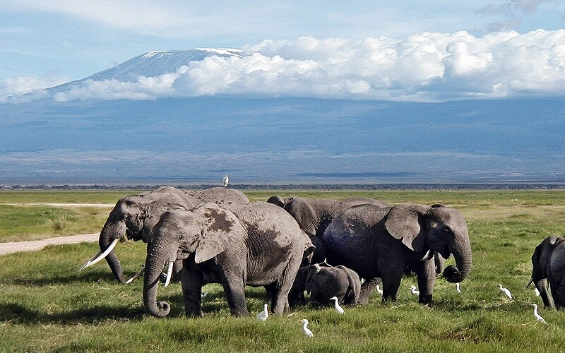 10 days kenya luxury air safari