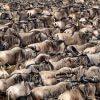 10 days tanzania luxury air safari