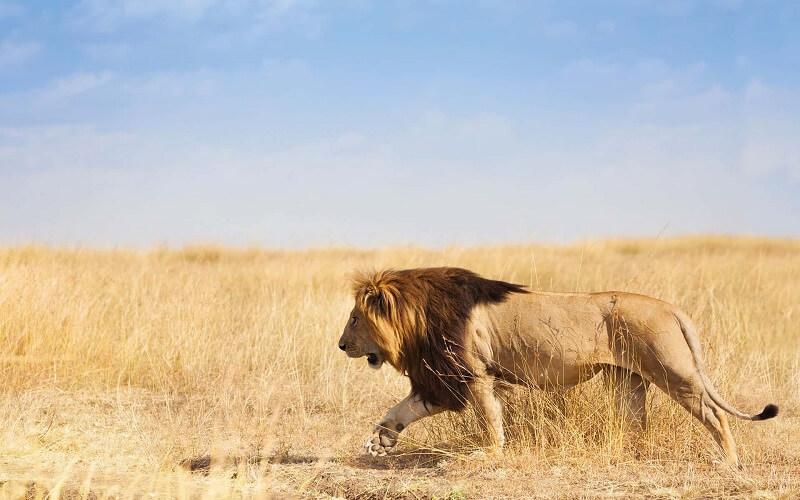 10 days tanzania luxury air safari