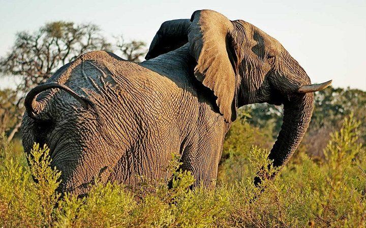 tanzania luxury safari 8 day elephants