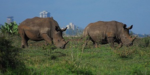 DAY TRIPS FROM NAIROBI