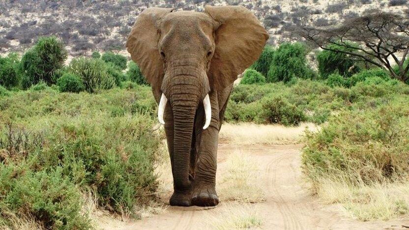 4 Day Samburu Kenya safari