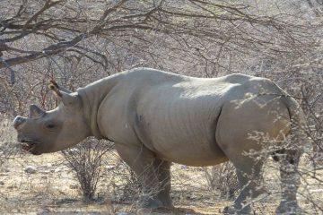 Kenya Rhino safari 8 Days