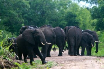 3 Days Nyerere National Park safari